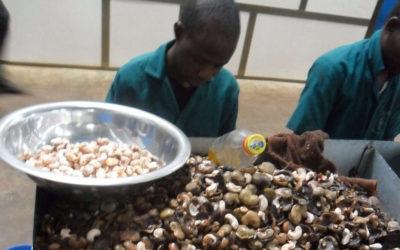 Cashew Processing Ivory Coast